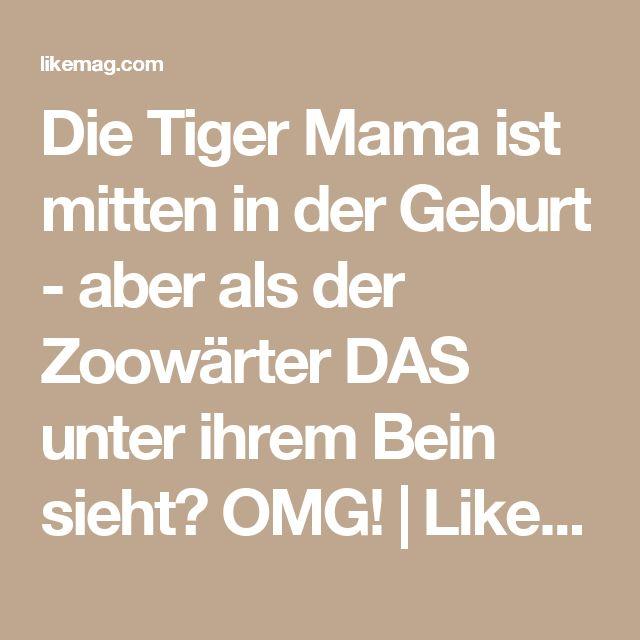 Die Tiger Mama ist mitten in der Geburt - aber als der Zoowärter DAS unter ihrem Bein sieht? OMG! | LikeMag | We Like You