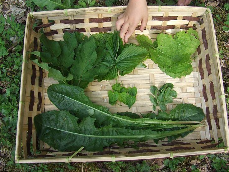 Bekijk de top 12 eetbare wilde groenten in dit overzicht. In de natuur vind je veel (vergeten) eetbare wilde planten die prima eetbaar zijn.