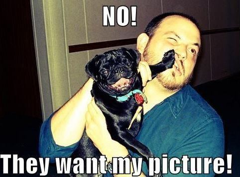 Pug wants to be star of the photo                                                                                                                                                      More