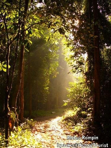 Endau Rompin National Park (Malaysia) is home to one of the oldest rain-forest and most fascinating eco-systems in the world.