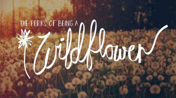 Coreageous Movement: The Perks Of Being A Wildflower #Blogger #Inspire #Jesus