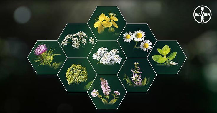 ¿Sabrías nombrar cuatro plantas medicinales con propiedades digestivas? En nuestro blog te contamos cuáles son algunas de las más usadas en fitoterapia para prevenir o aliviar el malestar digestivo, y te ofrecemos consejos y recomendaciones para una buena digestión. ¡Síguenos!