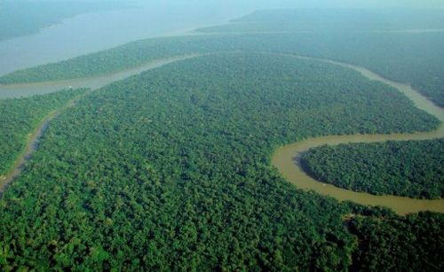 Amazon Rainforest is 'at Higher Risk of Tree Loss' - Researchers say the southern part of the Amazon rainforest is at a far higher risk of dieback than the models used in the most recent report by the Intergovernmental Panel on Climate Change (IPCC).