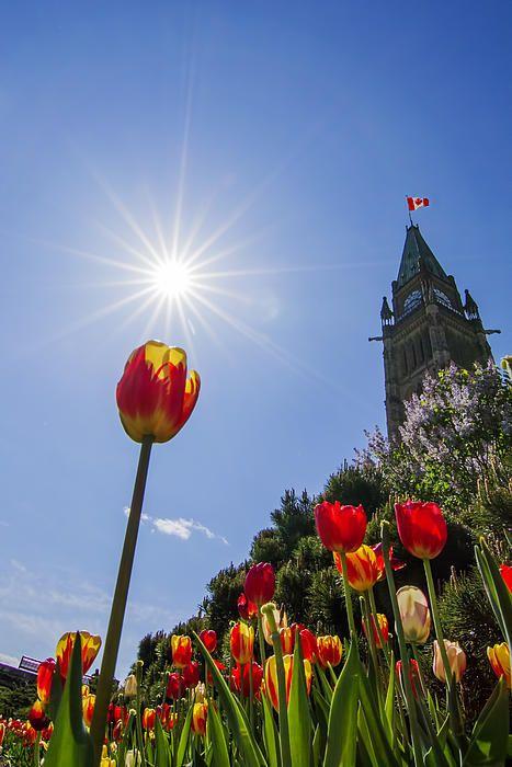 Ottawa Tulip Festival, Canada