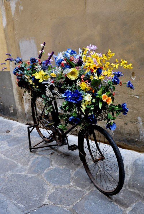 .A very unusual color of flowers and the blue bike, but it's so striking...