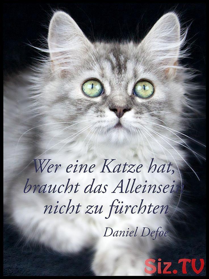 Zitate Katzen