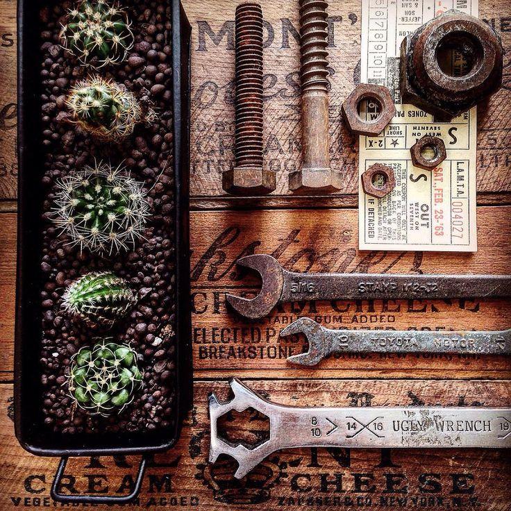 Mini cactus in industrial tin tray.  インダストリアルブリキトレイに並べて植えたサボテン。ちょっと大きくなってきました。 #cactus #minicactus #industrial #vintageindustrial #vintagetools #flatlays #knolling #knollography #treasuresintray #tv_retro #rust #サボテン #ヘッズインダストリアルブリキトレイ #ヴィンテージツール #さび #ヴィンテージスタイリング