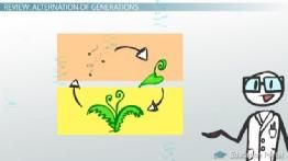 A Fern Life Cycle: Plant Reproduction Without Flowers or Seeds - Free Intro to Biology Video