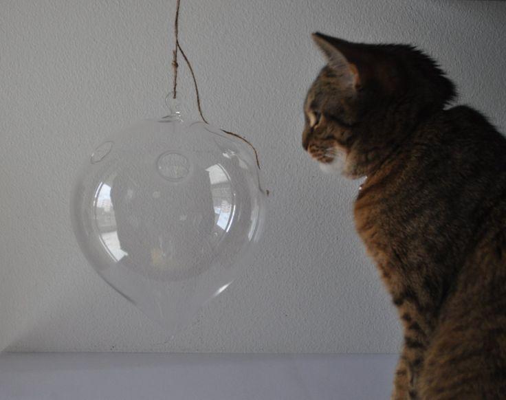 tiny glass home