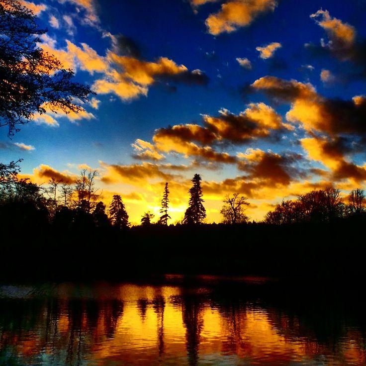 An amazing sunset over Tilgate Park.. #sunset #woodland #dense #trees #landscape #treeline #woodland #nature #tilgatepark #crawley #sussex