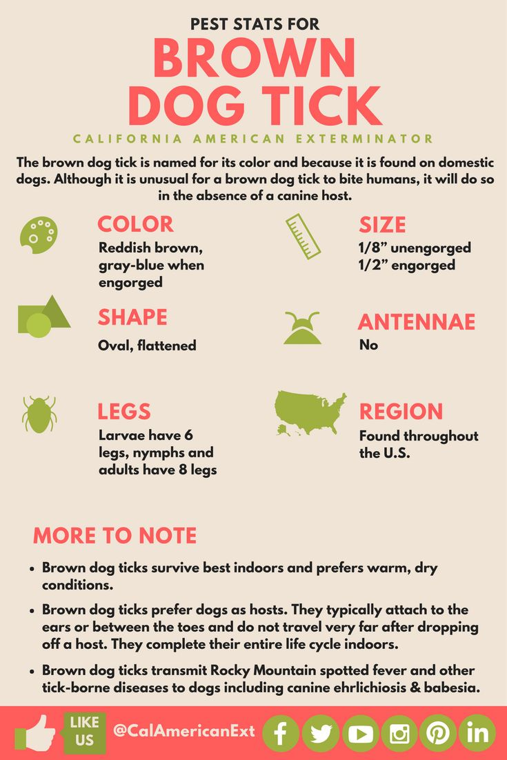 It's #TickAwarenessWeek! Check out this easy infographic on the Brown Dog Tick!  #StopTheSpread