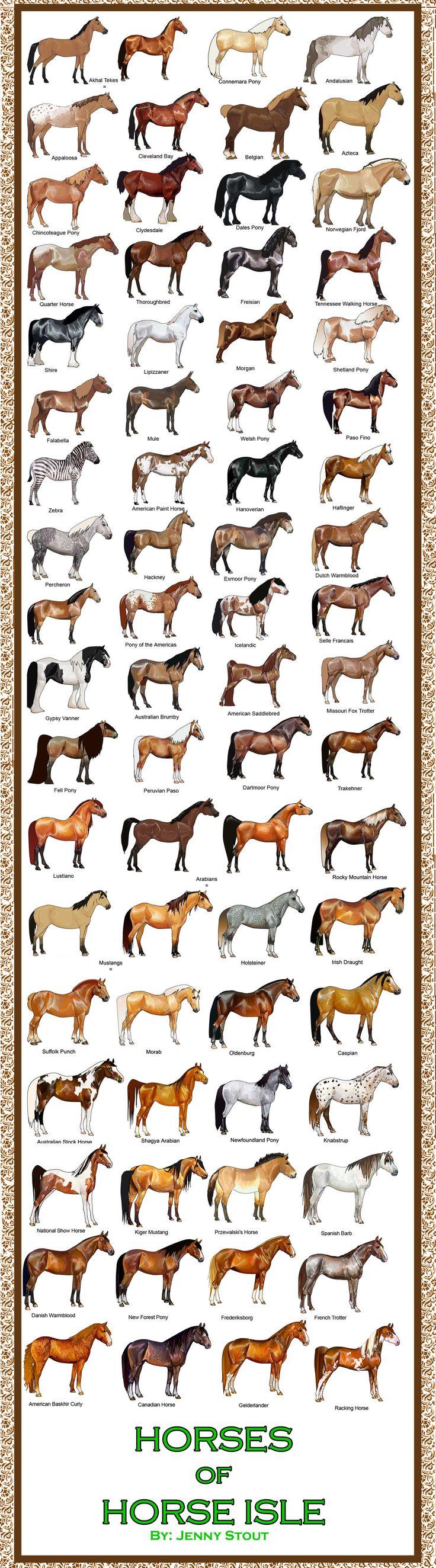 Breed Chart: Horses