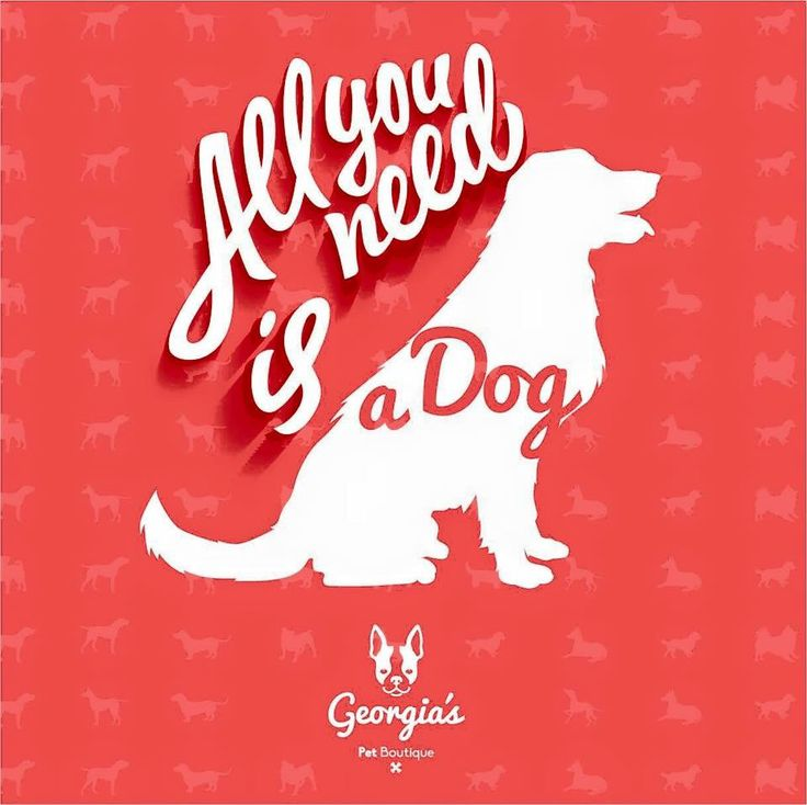 All you need is a Dog! Georgia's Pet boutique