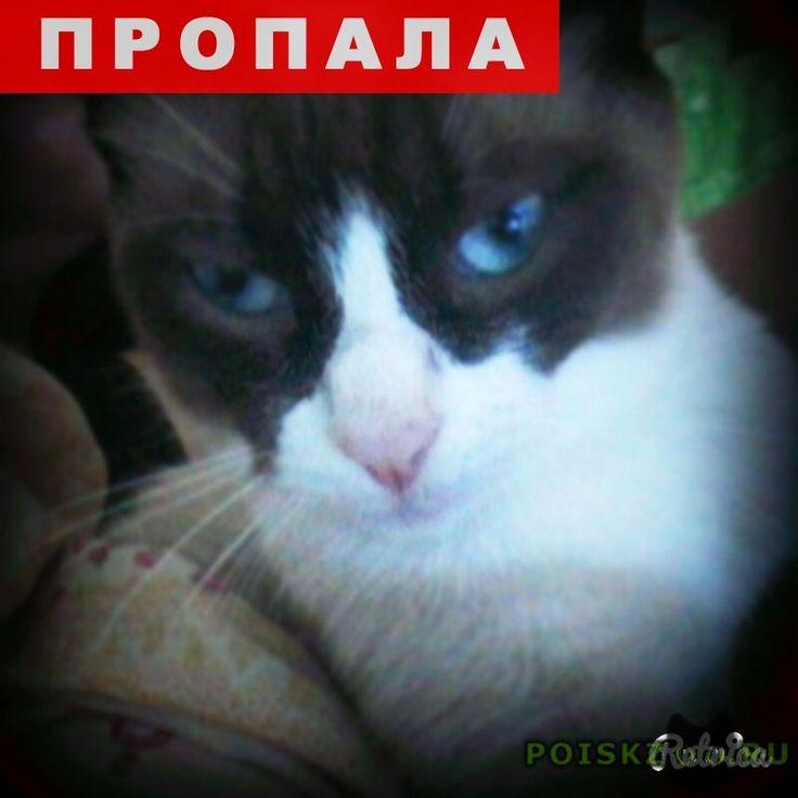 Пропал кот г.Екатеринбург http://poiskzoo.ru/board/read25029.html  POISKZOO.RU/25029 Потерялся кот по кличке сан саныч, нашедших прошу вернуть за вознаграждение. Потерялся .. утром юго западный район, академика бардина  РЕПОСТ! @POISKZOO2 #POISKZOO.RU #Пропала #кошка #Пропала_кошка #ПропалаКошка #Екатеринбург