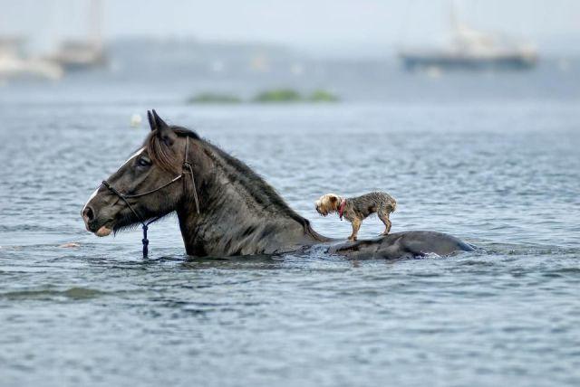 paard in het water met een hondje op de rug