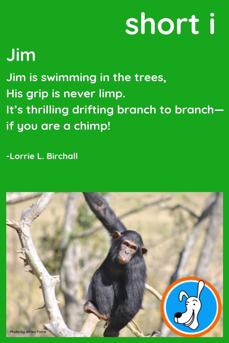 Image result for chimp poems