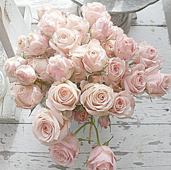 Gloriously pale blush pink roses, with chippy whitewashed floor below?! I do believe I'm in Shabby Chic Garden Heaven!  via Pink is My Passion