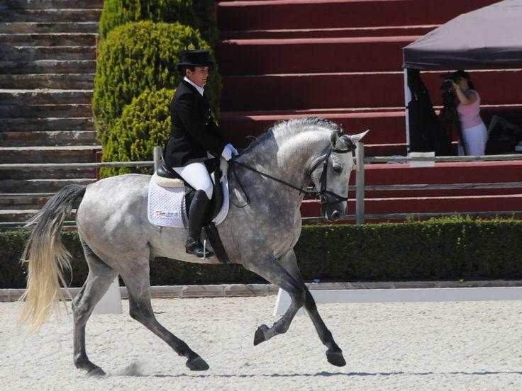 Actividades en Marbella: equitación y rutas a caballo.  #Andalucía