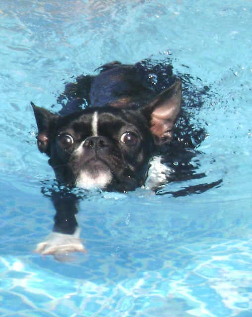 how to get your dog to swim