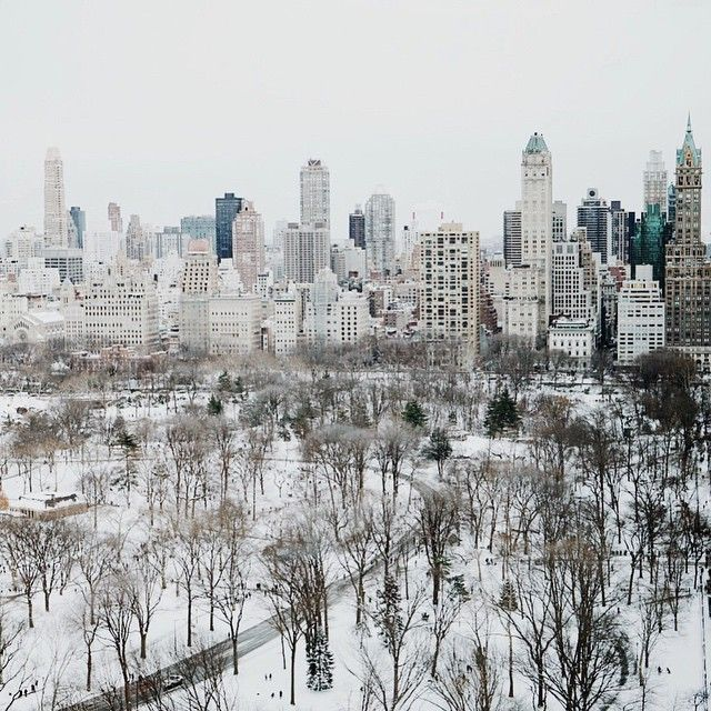 Winter White in Central Park. Photo courtesy of sophiesvob on Instagram.