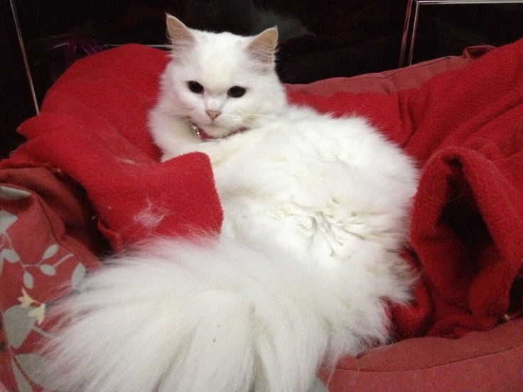 our pretty cat... LILY ☺