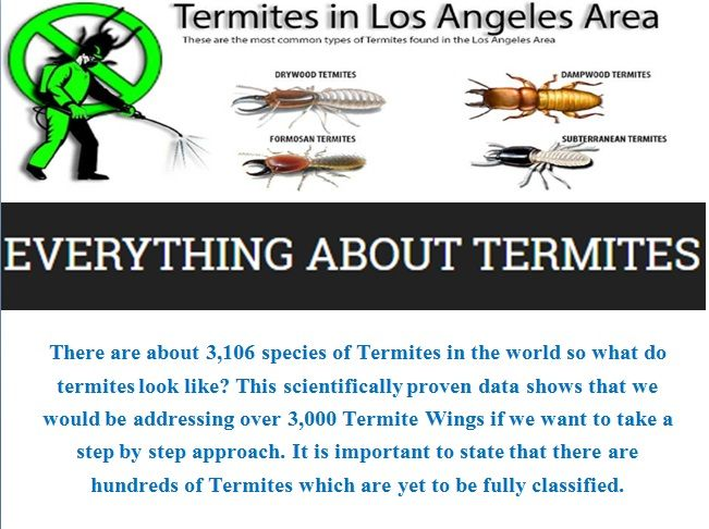 What Do Termites Look Like  There are about 3,106 species of Termites in the world so what do termites look like? This scientifically proven data shows that we would be addressing over 3,000 Termite Wings if we want to take a step by step approach. It is important to state that there are hundreds of Termites which are yet to be fully classified. http://termitedroppings.org/what-do-termites-look-like/