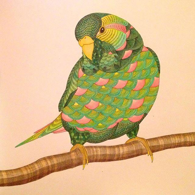 Animalkingdomcoloringbook On Instagram ParrotAnimal KingdomColoring Books