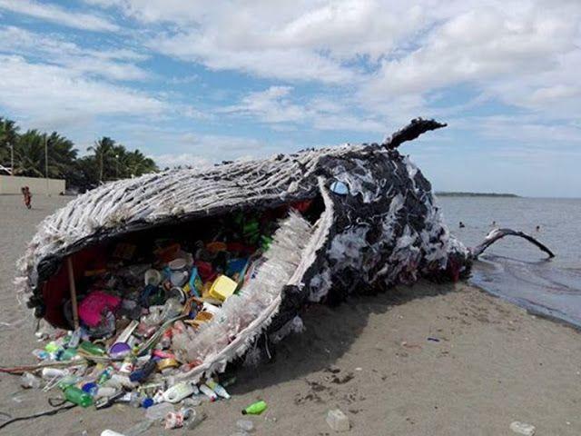 O mundo chora: Baleia encontrada morta em praia estava cheia de garrafas pets, lixos e sacos plásticos - Sempre Questione