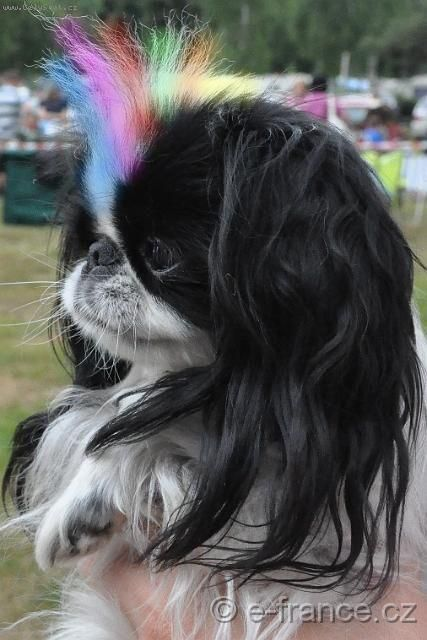 Best 25 Dog Hair Dye Ideas On Pinterest Pink Poodle