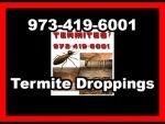 Termite Treatment in Weston | Accurate Pest Control Inc.