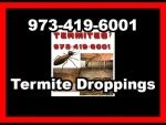Termite Treatment in Weston | Accurate Pest Control Inc.
