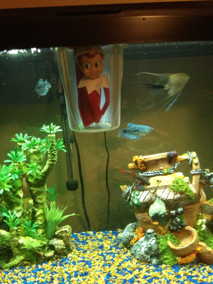 71 best images about elf on the shelf on pinterest elf for Bookshelf fish tank