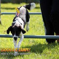 #dogalize Olimpiadi per cani: sono tornati i SuperGiochi! #dogs #cats #pets