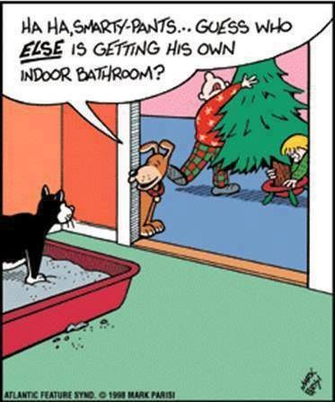 Indoor WC for dogs :))