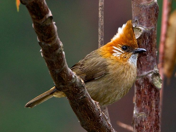 Bird Sanctuaries in Nagaland, India @ Sanctuariesindia.com
