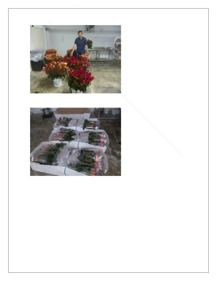 Flores Larga Vida FLORLICOL  www.florlicol.es.tl Flores Liofilizadas de Colombia F L O R L I C O L Bienvenidos a Florlicol primera empresa de inmortalización de flores naturales en Colombia por la técnica de Liofilización Sin adición de químicos,libres de tóxicos. Flores con mayor valor agregado,Naturales y Liofilizadas. Petalos liofilizados Rosas,hortensias,gardenias,calas,otras Arreglos florales para eventos Sociales Skype:liofilizaciononline1 Movil en Colombia 3112128296 Bogotá Colombia