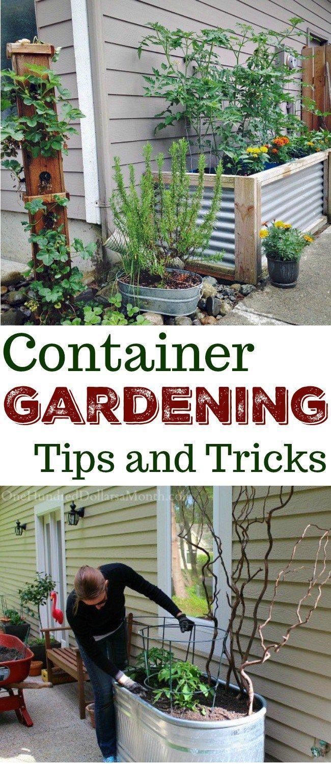 Container Gardening, Container Gardens, Container Garden Ideas, Gardening