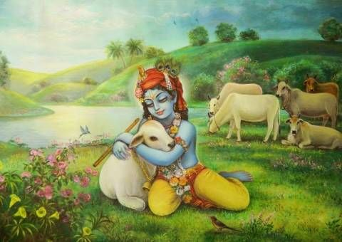 """Cows and Krishna have always been together. In His original form in the spiritual world, Krishna is a cowherd boy in the agricultural community of Goloka (""""cow planet"""") Vrindavan, where He keeps unlimited, transcendental surabhi cows.  When He descends to earth, Krishna brings a replica of Vrindavan with Him, and He spends His childhood tending cows and calves while playing in the pasturing grounds with His friends. His example shows the importance of cows to human society, the practical…"""