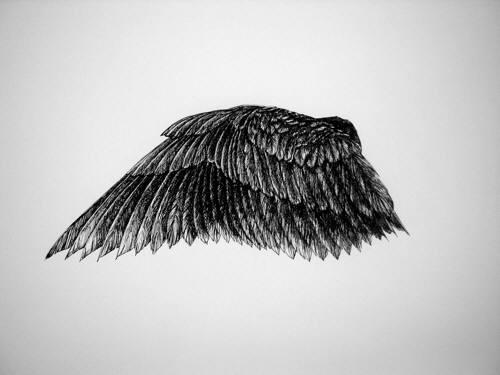 Sucker for bird art. Lovely ink drawing by Theresa Sapergia