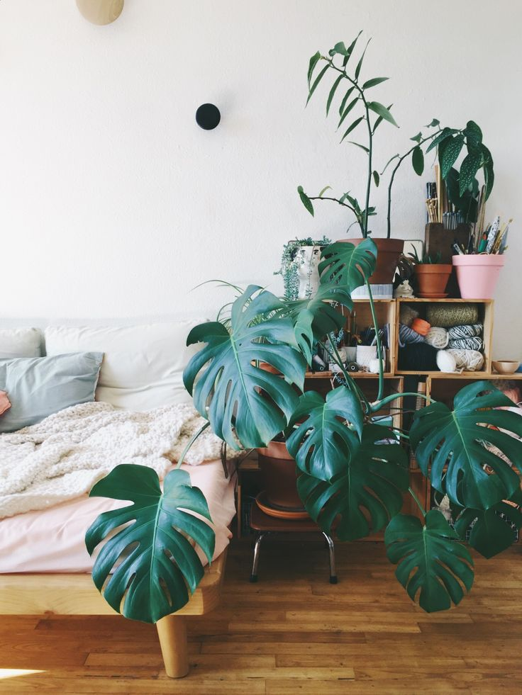 Monstera Living Room | Plan B by Morganours