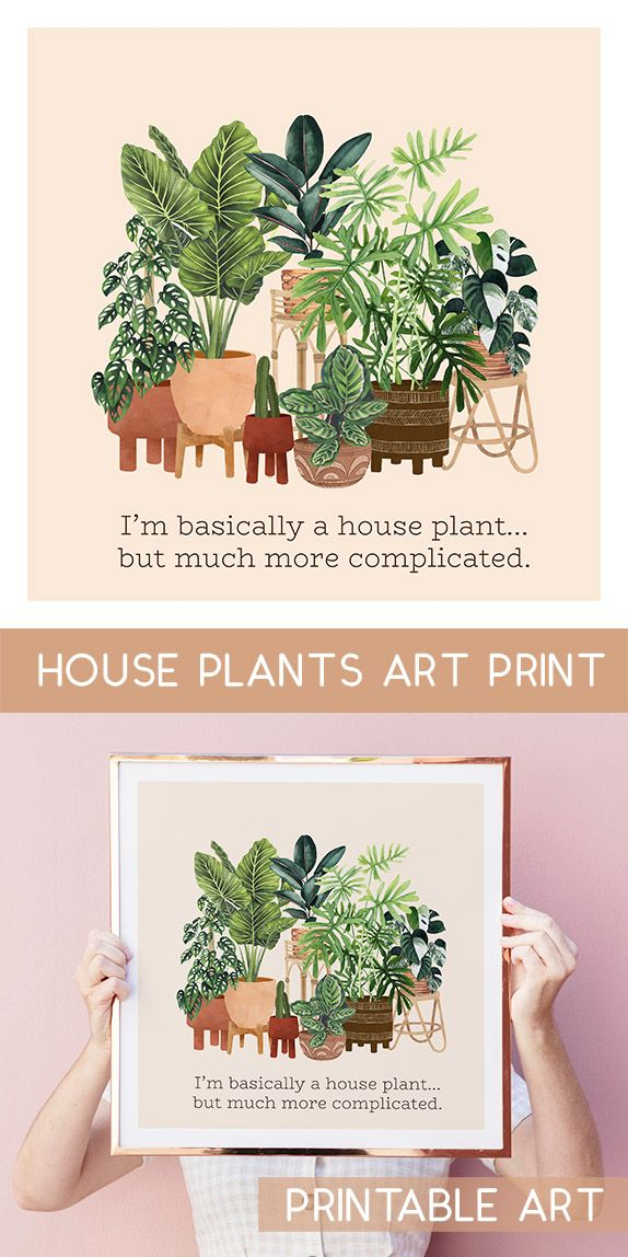 I M A Complicated House Plant Plant Lover Art Plant Illustration Watercolor Plant Print House Plants Art Print Indoor Plants In 2020 Plant Art Print Plant Art Watercolor Plants