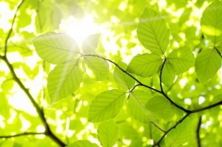 Sunlight - Can we tap into this source of energy?   Brett Elliott