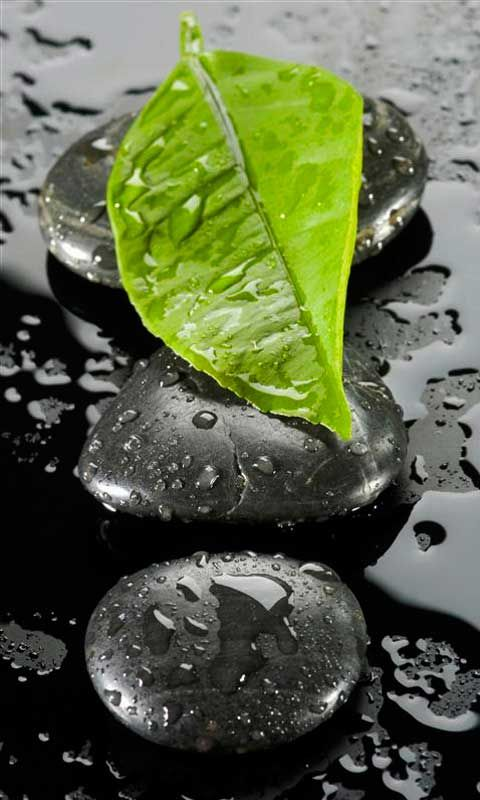 Green Leaf Hited by Rain. Nice Macro photography, with the simple design…