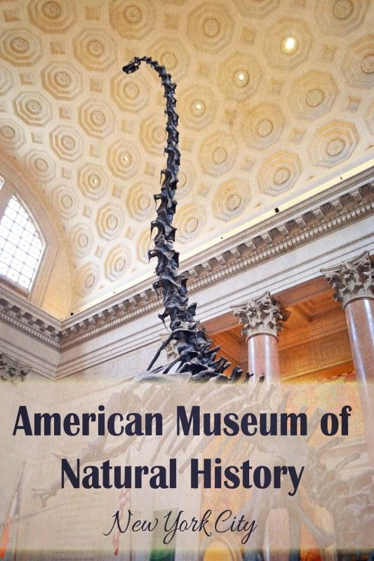 A first-timer's guide the the American Museum of Natural History in New York City | tipsforfamilytrips.com