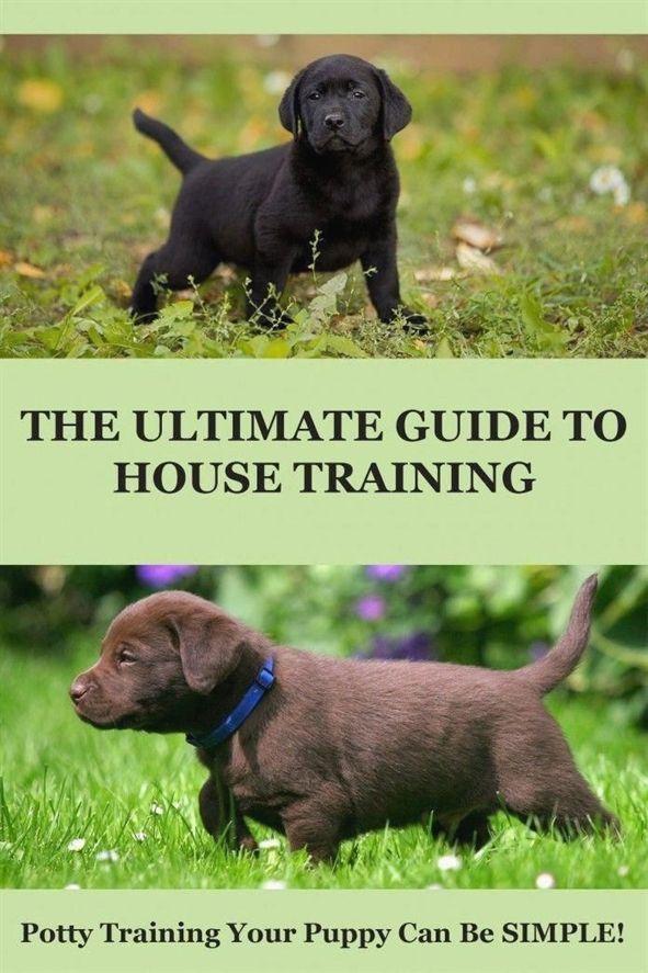 Dog Training Denver Dog Training Toy Dog Training 85251 Dog
