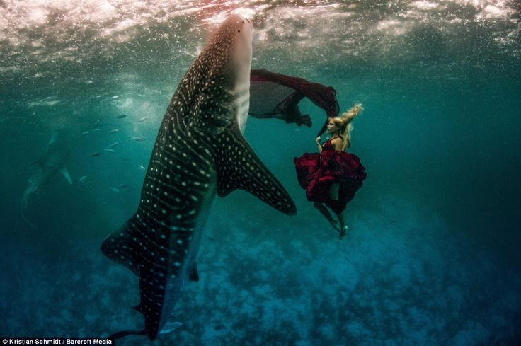 Underwater fashion: Instead of flaunting their curves on the catwalk like other international models, Hannah Fraser, 36, and Roberta Mancino, 32, gamely dived up to 25-feet-deep into the ocean
