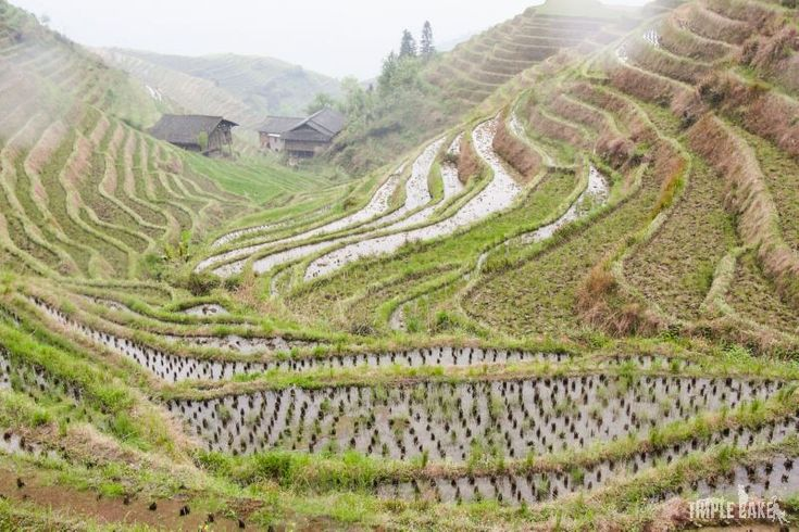 Dragon Backbone's Rice Terraces, China