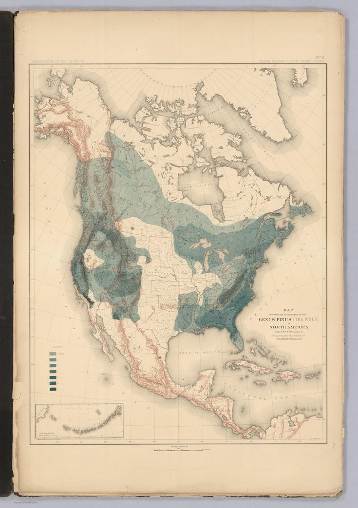 State Of American Forests 1884