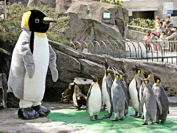 21 interesting facts about penguins that may just put a smile on your face.