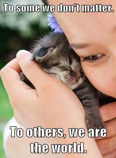 Adopt a kitten and they will love you for life *~❤•❦•:*´`*:•❦•❤~*